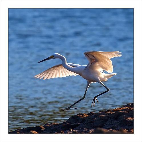 fp276. Egret Landing
