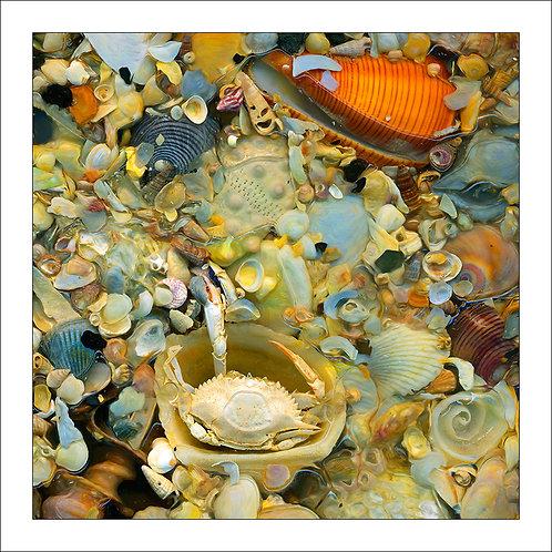 fp312. Liquid Shells