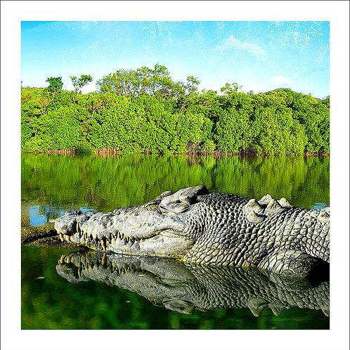 fp72. Saltwater Crocodile