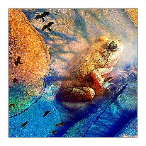 fp126. Lakefield Frog