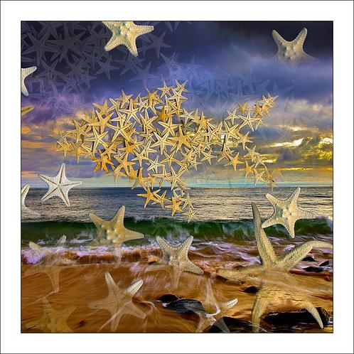 fp293. Starfish