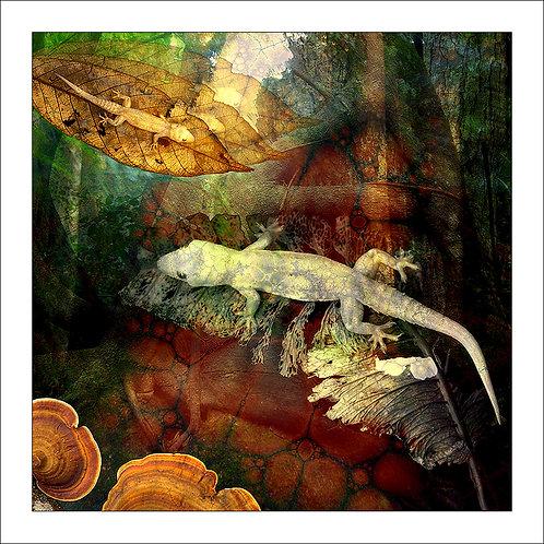 fp159. Gecko Delight