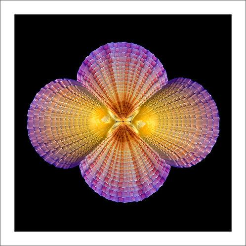 fp193. Inner Shell