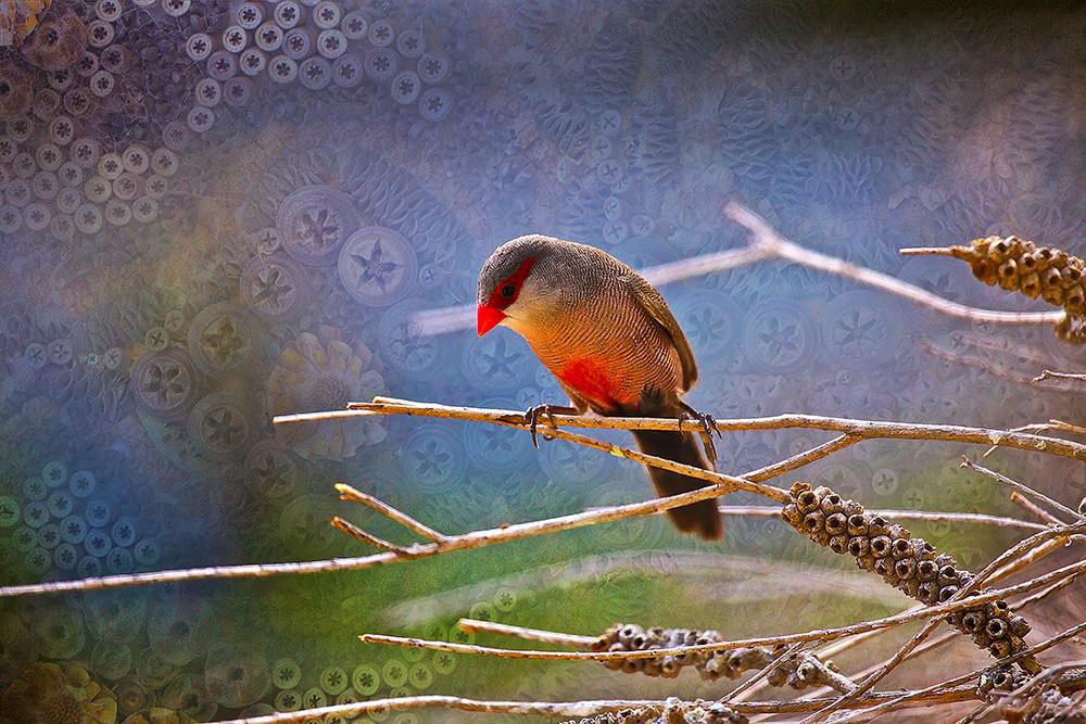 Thinking finch