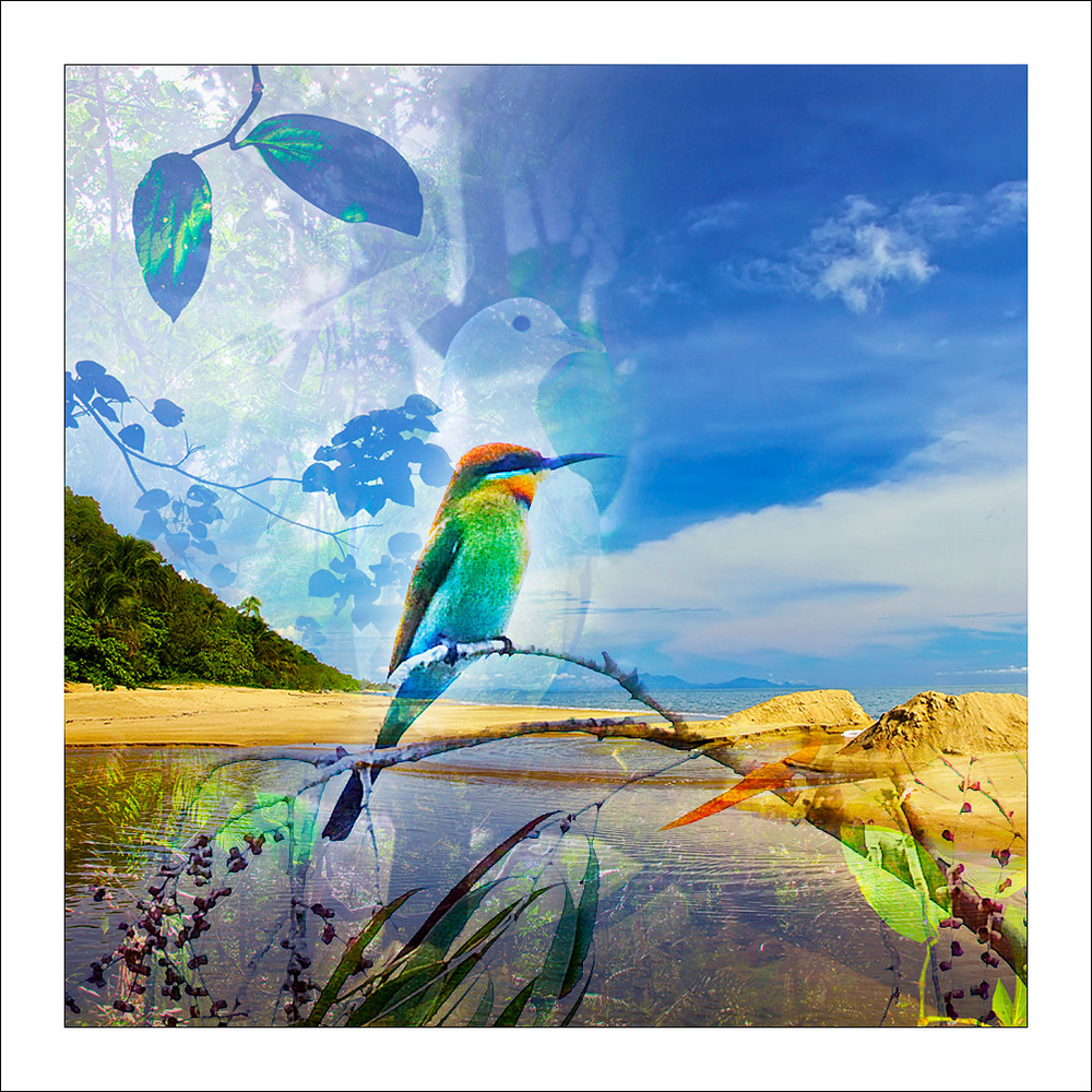 Rainbow bee eater bird on branch on a tropical beach with dove overlay in background