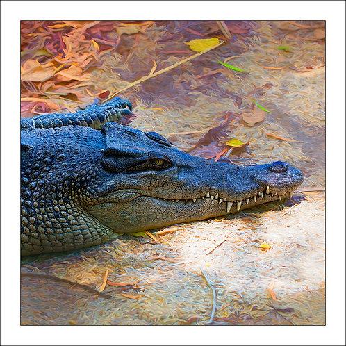 fp324. Crocodile Smiling
