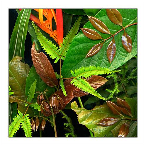 fp231. Botany