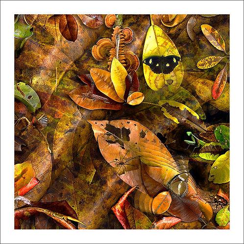 fp134. Flutter of Leaf