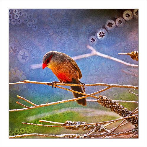 fp181. Thinking Finch