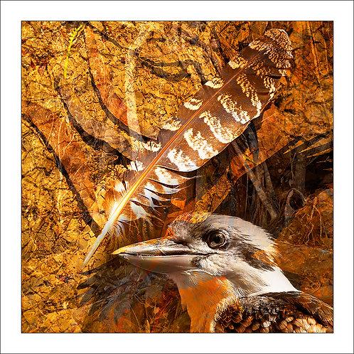 fp208. Kookaburra Feather