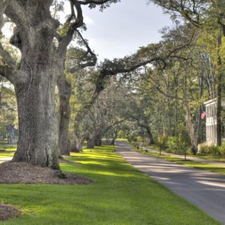 Oak Forest + Garden oaks