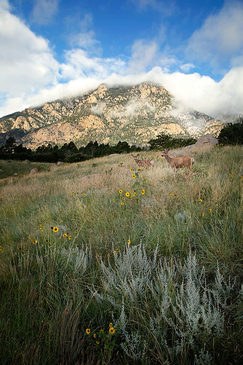 """Mountain Meadow"" - Mary Bailey Cheyenne Mountain State Park CO"
