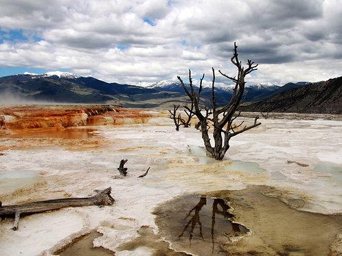 """Alone""-Mary Bailey Yellowstone National Park"