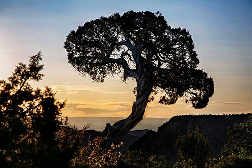 """""""Winds of Time"""" - Mary Bailey Black Canyon of the Gunnison CO"""