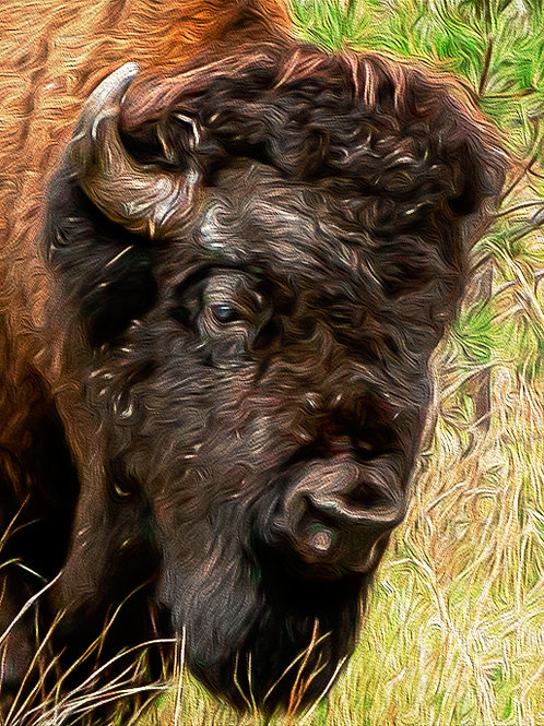 """""""Wise One"""" - Mary Bailey Custer State Park SD"""