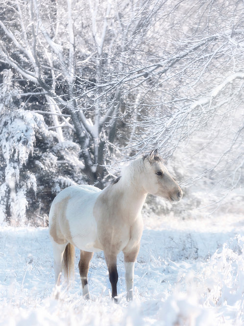 """""""Snowy"""" ~ Mary Bailey"""