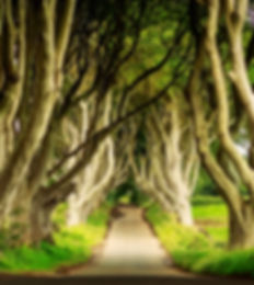 Dark Hedges in Armoy, Northern Ireland a