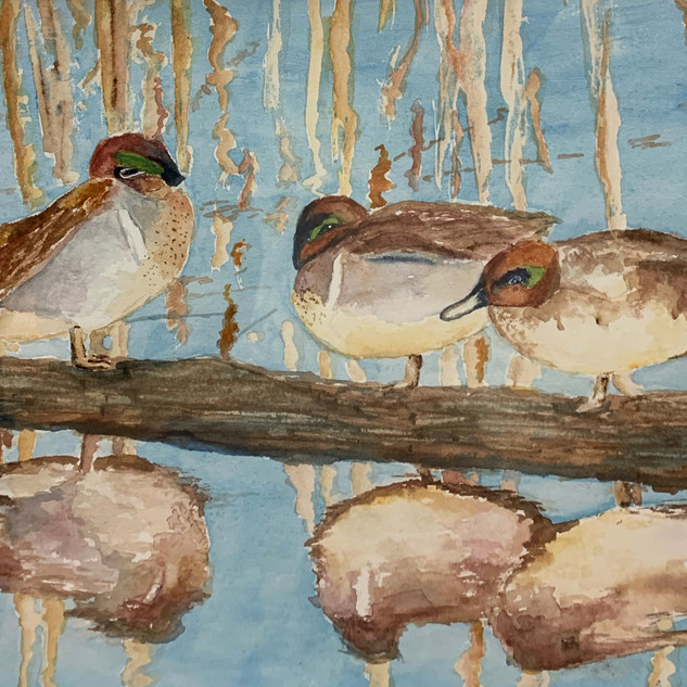 Green Wing Teal Trio