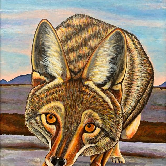 Foxy Coyote