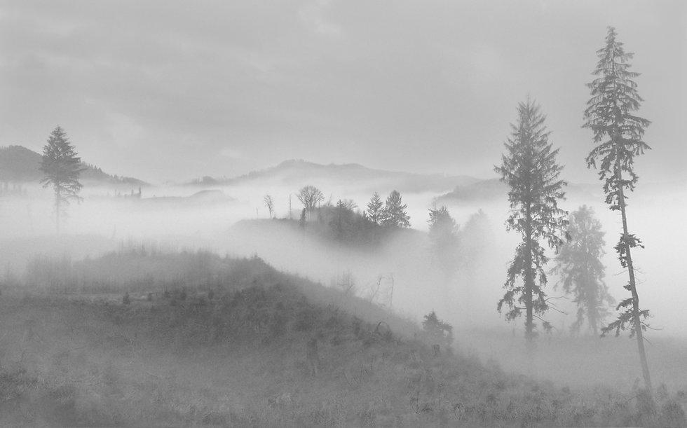 Nelson-1-Fog_Coast Range_Oregon.jpg