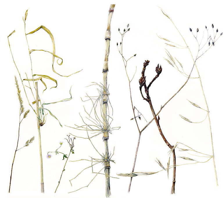 Stepick_Horsetail Fern and Winter Grass and Twig Companions-cleanupFLAT.jpg