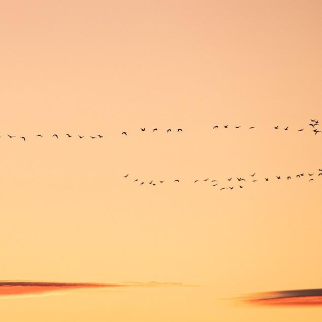 Sauvie Island Sunrise