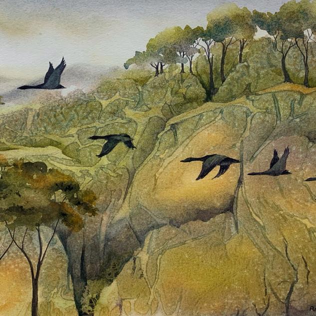 Morning Migration