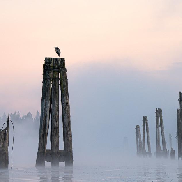 Multnomah Channel Heron in Fog