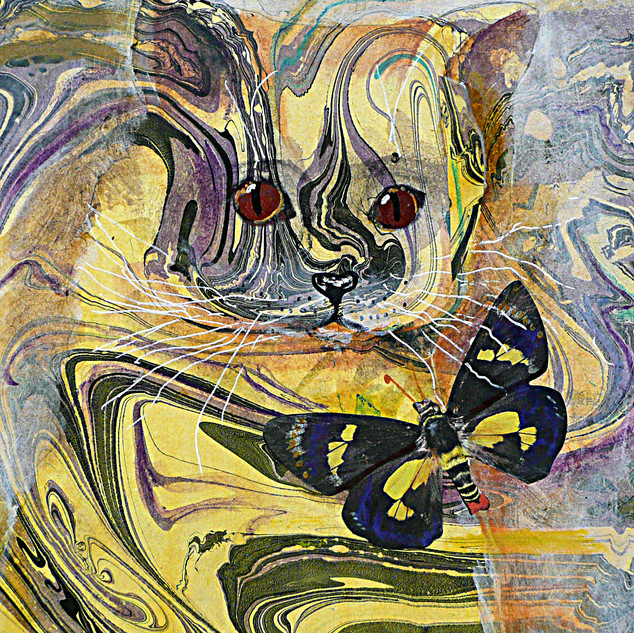 Yellow Cat and Regent Skipper