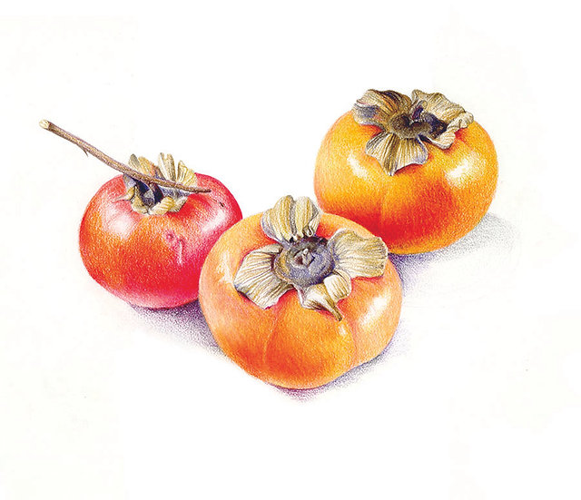 Persimmon Crop at Jane's, colored pencil