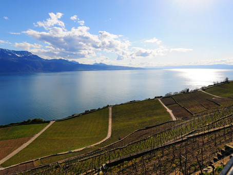 Agri Hebdo | Oenotourisme: récompense pour le projet La Vigne