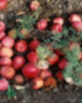 Las manzanas caídas