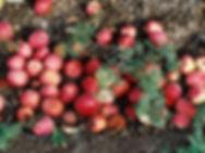 продажа растений и семян