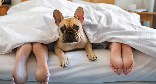 Sleep with doog on mattress