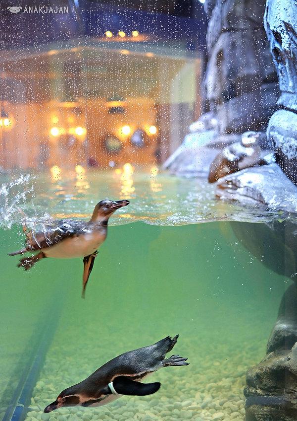 AT Jakarta penguins.jpg