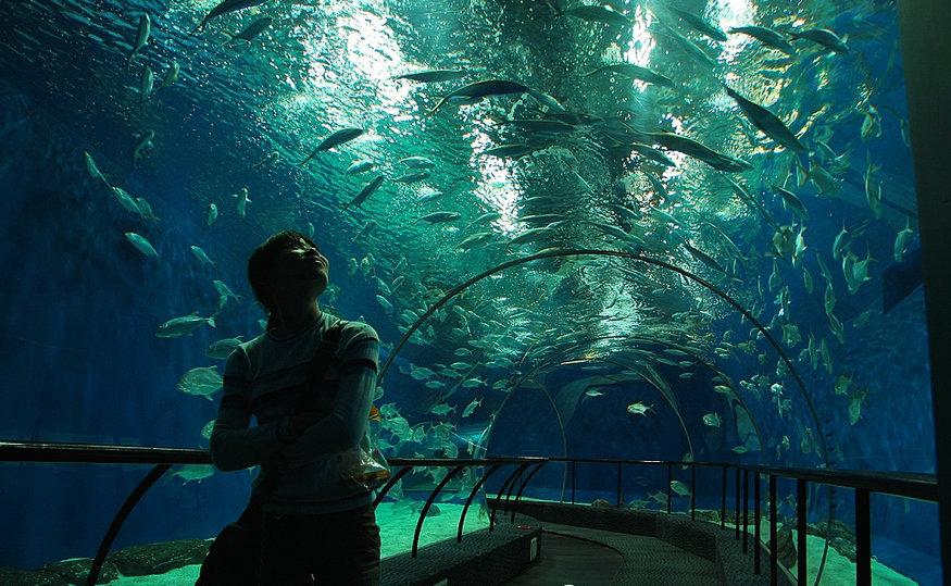 AT Shanghai Ocean Aquarium 3.jpg