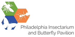 Philadelphia Insectarium and Butterfly Pavilion Logo - Yetzer Studio - Philly Insects AR