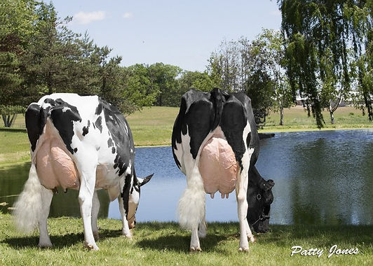 218-06145-rear-cows-by-pond-624x446.jpg