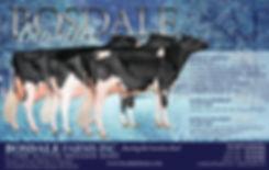 Bosdale_HALF_W2019-D2.jpg
