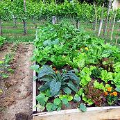 lavori-orto-settembre-semina-raccolta-3.