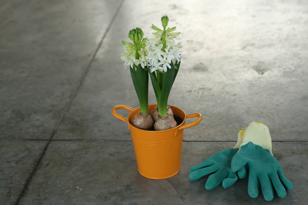 White Hyacinth in Orange Bucket