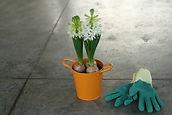 White Hyacinth in Orange Bucket