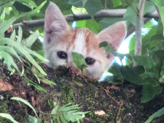 Cats in El Salvador