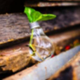 water_bulb_leaf.jpg