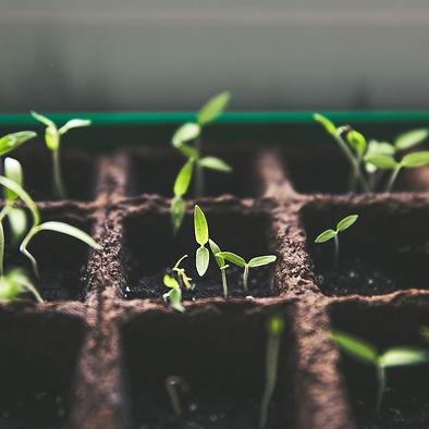 seedlings_growth.jpg