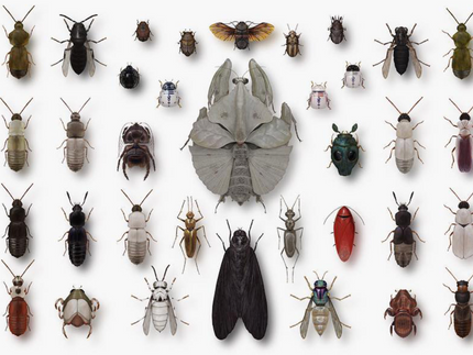 ACTIVITY: Invent an Insect!