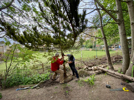Adding mature trees