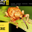 REASEARCH: National Insect Week