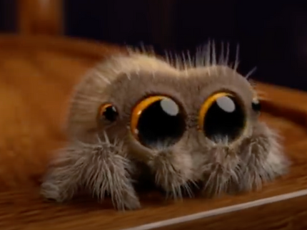 WATCH: Lucas the Spider