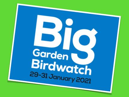 TAKE PART: RSPB Big Garden Birdwatch
